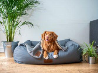 Hond naast een grote kamerplant