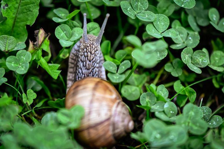 Slakken in je tuin