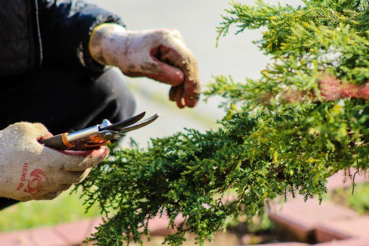 Renoveren van je tuin